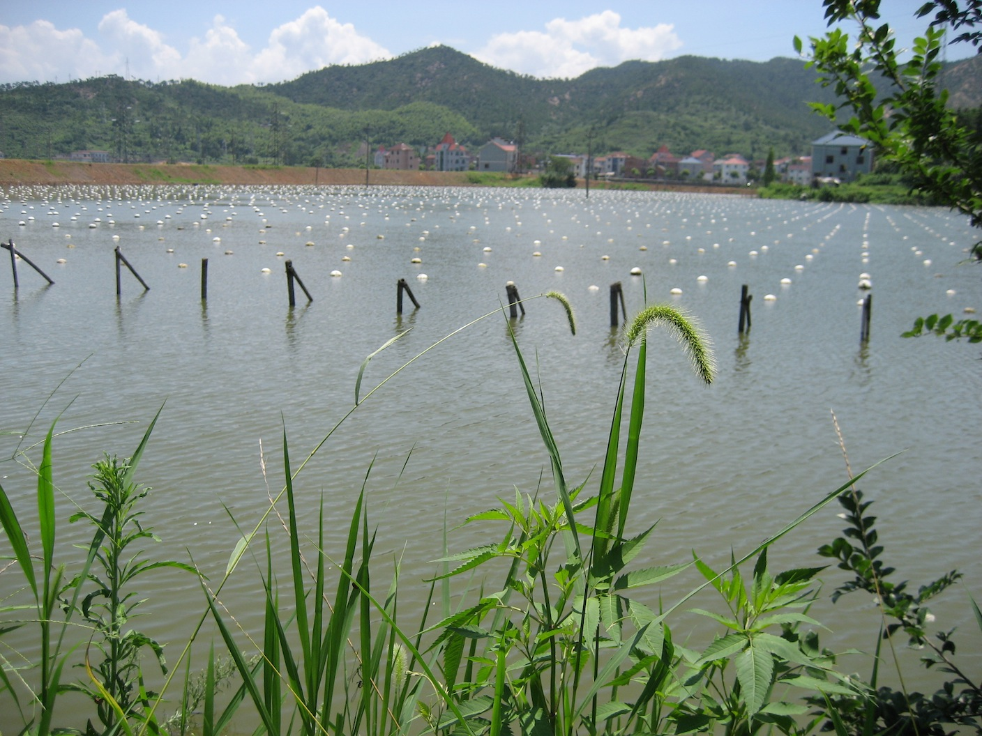 Freshwater-Cultured-Pearl-Farm.jpg